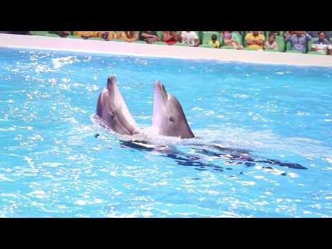 Dubai Dolphinarium: Dolphin Show : A Decade of Bringing Fun, Joy & Happiness