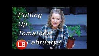 Thursday Workday   Planting & Potting Up TOMATOES February 1!   Vlog