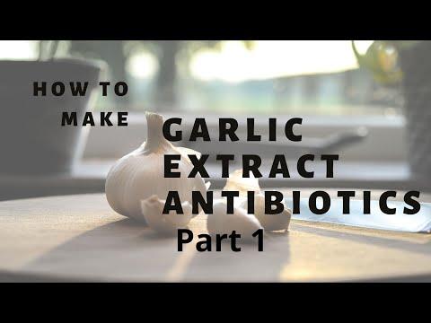 How to make garlic extract antibiotic