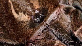 Feeding 4 of my tarantulas.