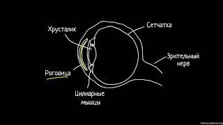 Диоптри́я, аберра́ция и человеческий глаз | Геометрическая оптика