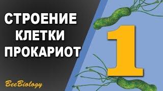Урок по Биологии №1 - Строение прокариотической клетки / Клетка Бактерии