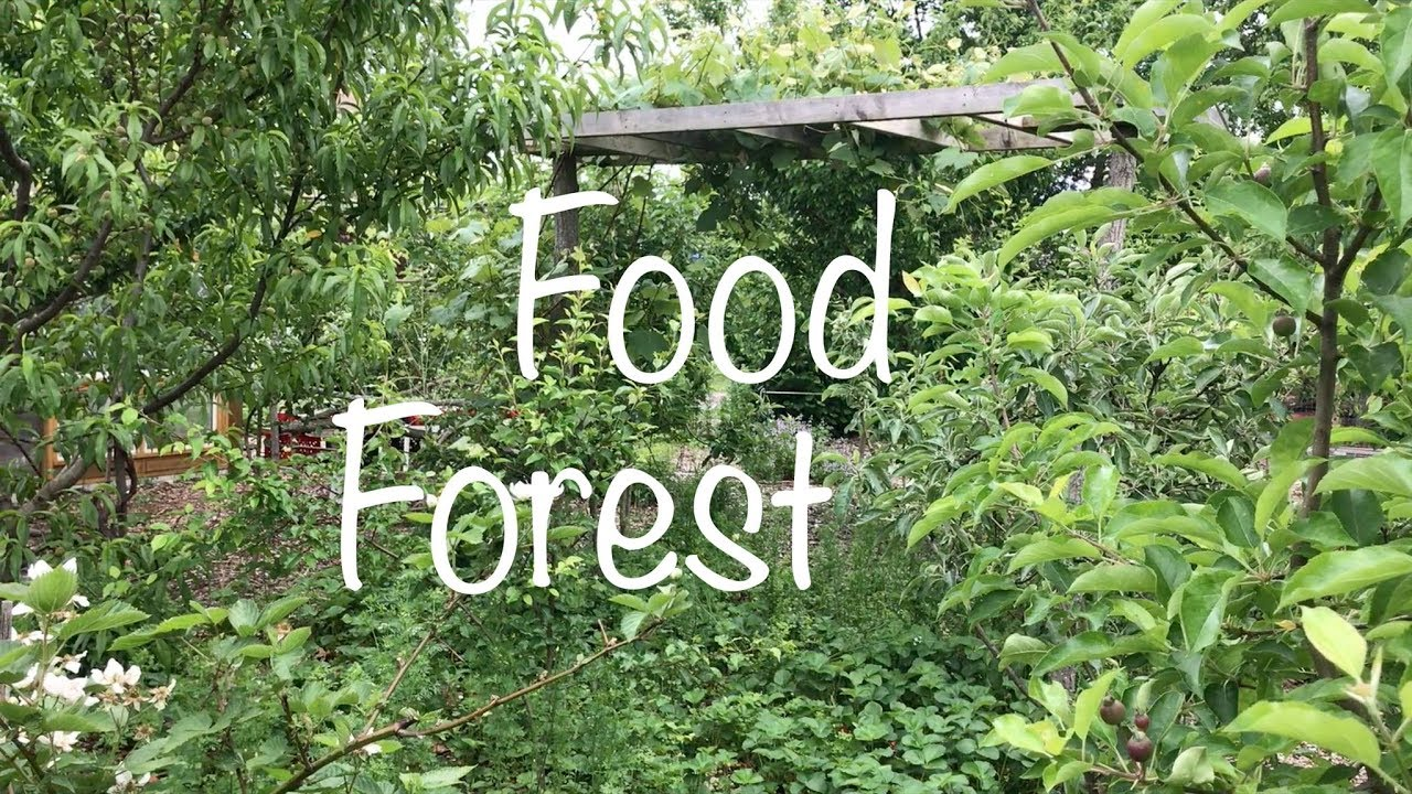 Epic Permaculture Food Forest on modern garden design, veggie garden design, herb garden design, landscape design, companion planting garden design, high tunnel garden design, vegetable garden design, horticultural therapy garden design, water garden design, simple house garden design, forest garden design, bioretention garden design, swale garden design, bioshelter design, livestock garden design, xeriscape garden design, home garden design, keyhole garden design, cutting flowers garden design, sustainable garden design,