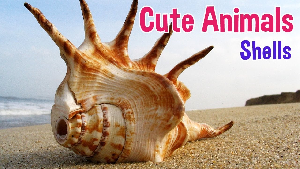 seashells animals for kids