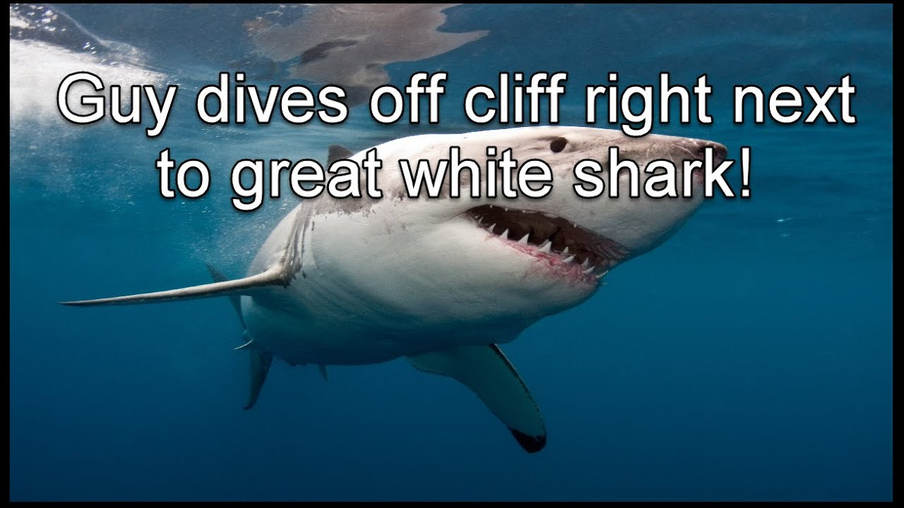 Guy Dives Off Cliff Right Next To Great White Shark YouTube - Man fights great white shark sydney harbour jumping cliff