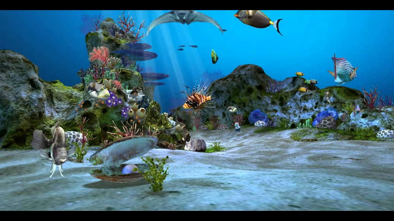 Amazingly Beautiful 3D Aquarium Live Wallpaper Wallpaper - YouTube