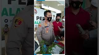 Ganja Ditanam Warga Tasikmalaya Secara Tumpang Sari Dengan Tanaman Cabai