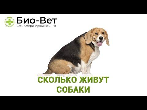 Сколько живут собаки. Продолжительность жизни собак