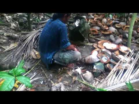 Pues Hafa * Alamagan Island 2013 * Coconut Pig Food Preparation