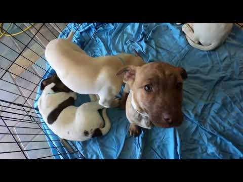Puppies up for adoption