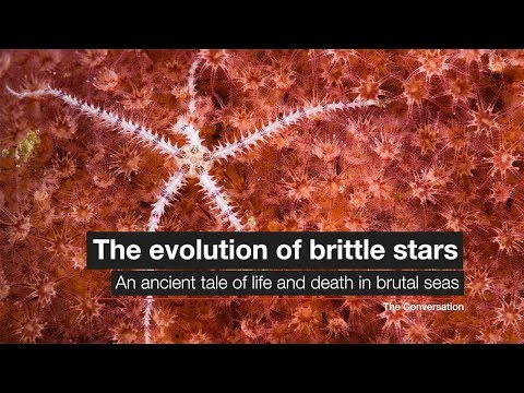The Evolution Of Brittle Stars