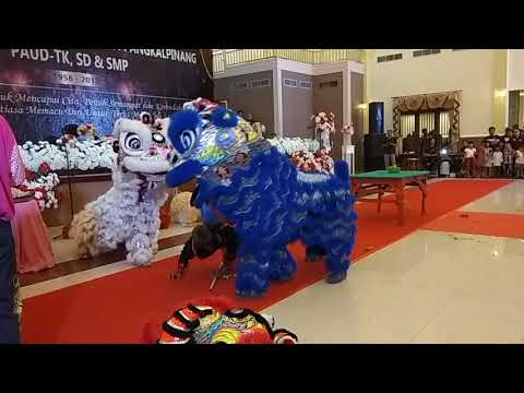 aksi barongsai saudara/hong yi lions and monkeys