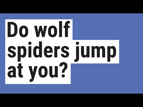 Do Wolf Spiders Jump At You?