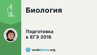 Задание 8  ЕГЭ 2016 по биологии