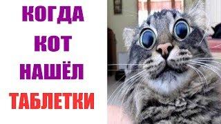 Лютые приколы.Кот нашёл твои таблетки.Угарные мемы.