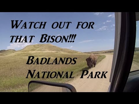 Watch Out For That Bison!!! Badlands On The Road Vanlife
