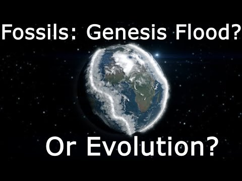 Fossil Record: Noah