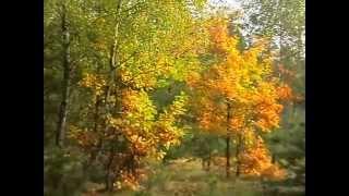 Las jesienią 2012