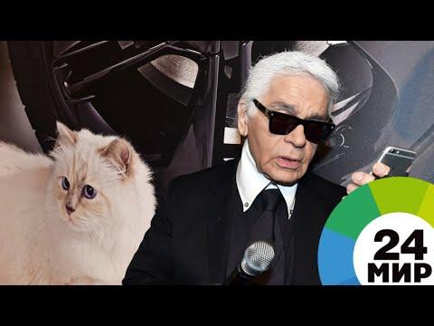 Стать «независимой женщиной»: кошка Лагерфельда рассказала о планах на будущее - МИР 24