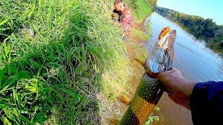 НАШЛИ ЩУКУ НА МЕЛИ СНОВА КЛЮЁТ НА ПЕСКАХ Рыбалка на спиннинг осенью Ловля щуки на джиг