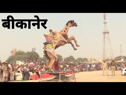 बीकानेर ऊँट अंतराष्ट्रीय ऊंट उत्सव  Camel Festival, Rajasthan | Camel's  dance in Bikaner |