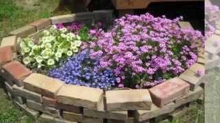 видео Декоративная капуста - замечательное украшение сада