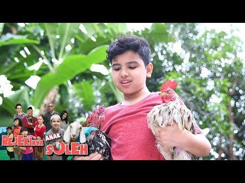 Keren! Soleman Menyelamatkan Ayam Yang Mau Diadu  - Rejekinya Anak Soleh Eps 5