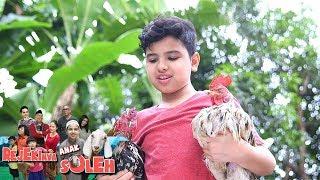(6.21 MB) Keren! Soleman Menyelamatkan Ayam yang Mau Diadu  - Rejekinya Anak Soleh Eps 5 Mp3