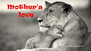 Mother's love to animals (HD1080p)