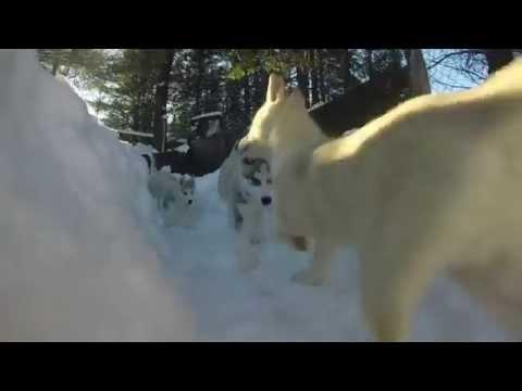 epic-puppy-maze-[original]---#30dn30secs-2-of-30