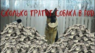 Сколько стоит содержание собаки??