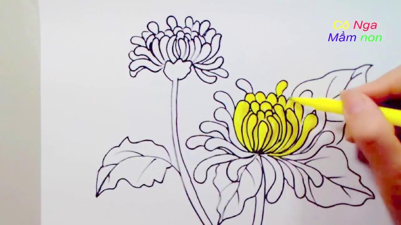 Vẽ hoa cúc đơn giản- Cách vẽ hoa cúc - Drawing a Daisy