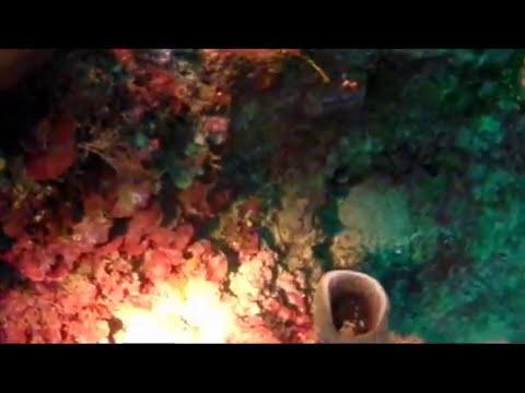 Diving nel Salento: immersioni subacquee nel mare del Sud Italia