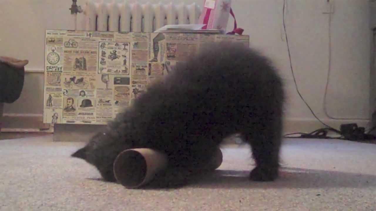 Sho Ko Cat Videos