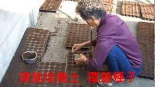 田龜計畫:  紅藜育苗