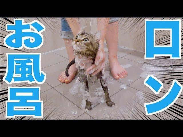ロンのお風呂初公開!お風呂好きかもしれない[換毛期]【木下ゆうか】