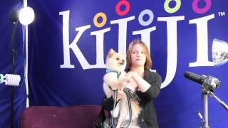 Pomeranian, Peanut - June 8, 2013