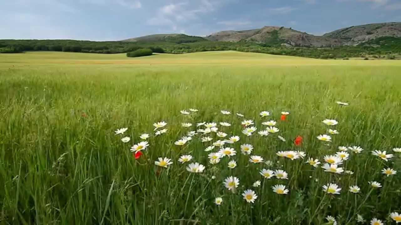 Природа - Весна - YouTube