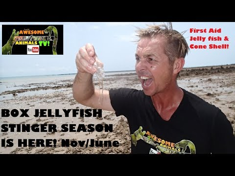 BOX JELLYFISH Sting HOW BAD Is It??  Stinger Season - Cone Shell - Stinger First Aid