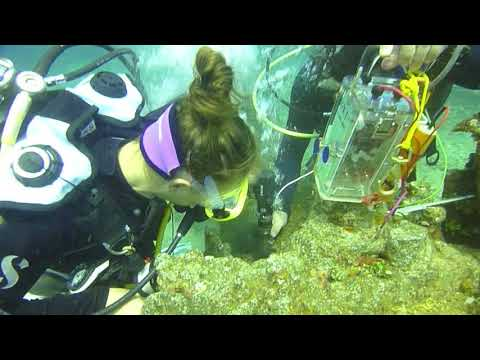Seabee corrosion measurements