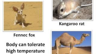Science - How animals adapt to desert habitat  - English