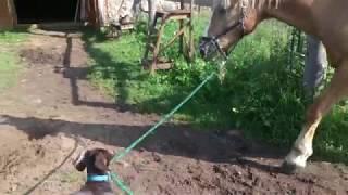 Когда твой конь в сто раз старше твоей собаки