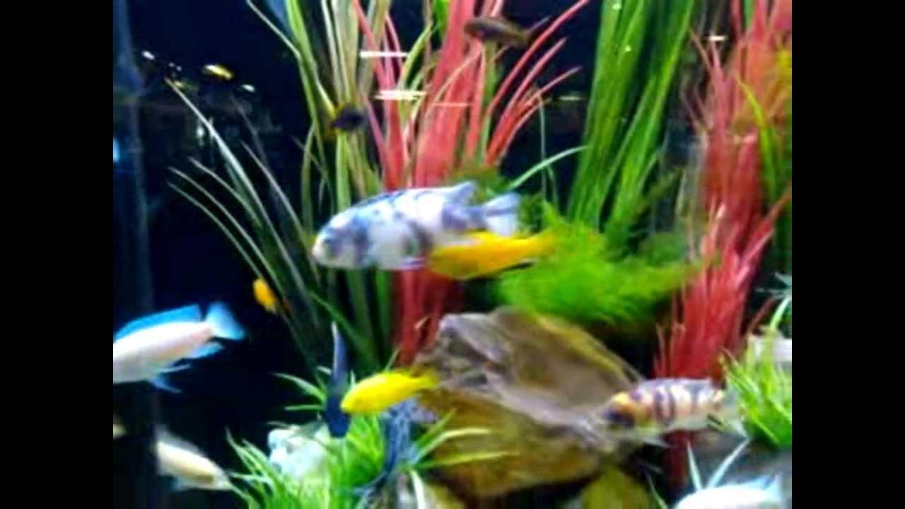 Freshwater aquarium fish dallas - Dallas Fish Gallery Store