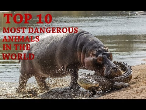 The 10 Most Dangerous Animals In The World - YouTube