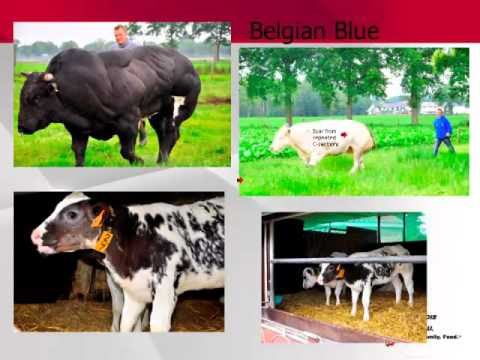 Deb Moore - Illinois Farm Bureau Animal Welfare Study Tour to the EU