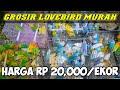Paling Baru Termurah Di Indonesia Update Harga Lovebird April   Mp3 - Mp4 Download