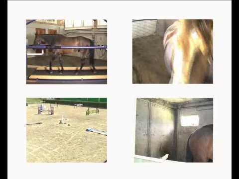 das leben ist ein pferdehof.flv
