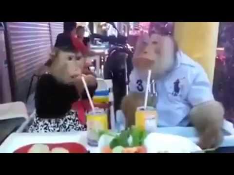 Harun Memmedov  Er Arvad Restoranda 2017
