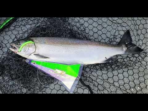Sekiu Coho-Salmon Fishing