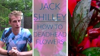 How To Deadhead Flowers! | Jack Shilley